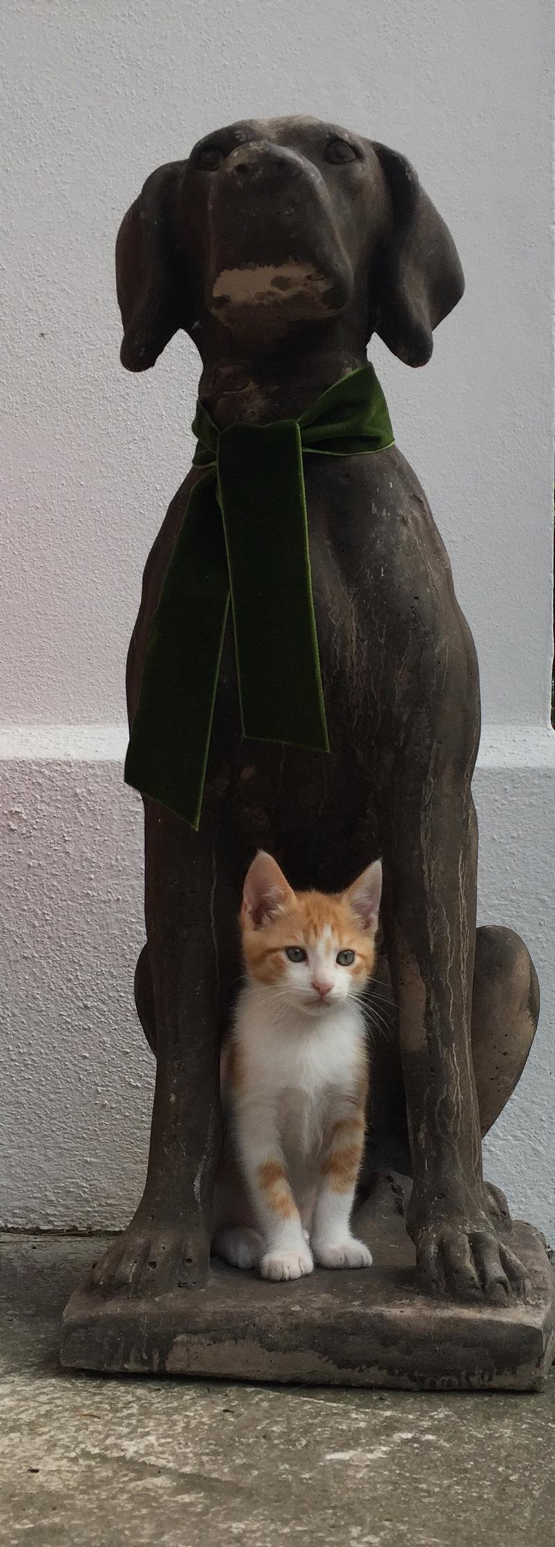 Tierarzt Dr. Ina Hipp - Mobile Tierarztpraxis für Kleintiere rund um den Starnberger See - Kitten mit Hund
